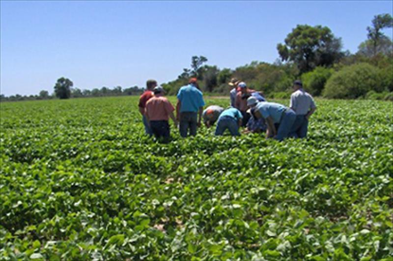 $275 millones prestarán el BID y BM para que Invest-Honduras lo invierta en agricultura