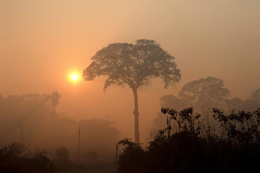 Instituciones de DDHH de 7 países preocupadas por incendios en la Amazonía