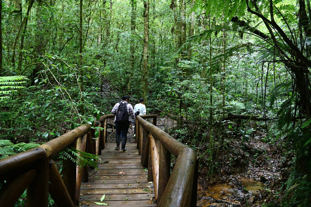 Congreso aprueba moción para investigar otorgamiento de permisos ambientales en zona de La Tigra