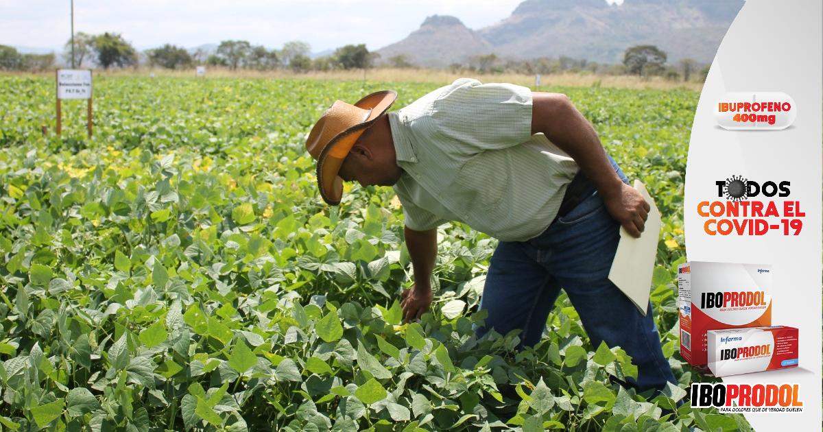 """Vía Campesina lamenta que programas agrícolas de las Fuerzas Armadas, son """"invisibles"""" y no llegan al pequeño agricultor"""