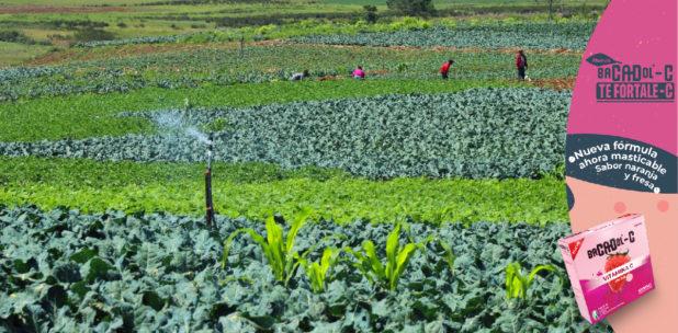 IICA impulsa mejoras en inocuidad de alimentos en Honduras y Belice
