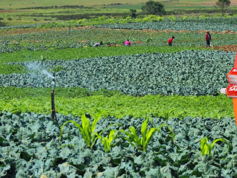 Honduras y demás países de América impulsarán la voz de los agricultores en cumbre global alimentaria